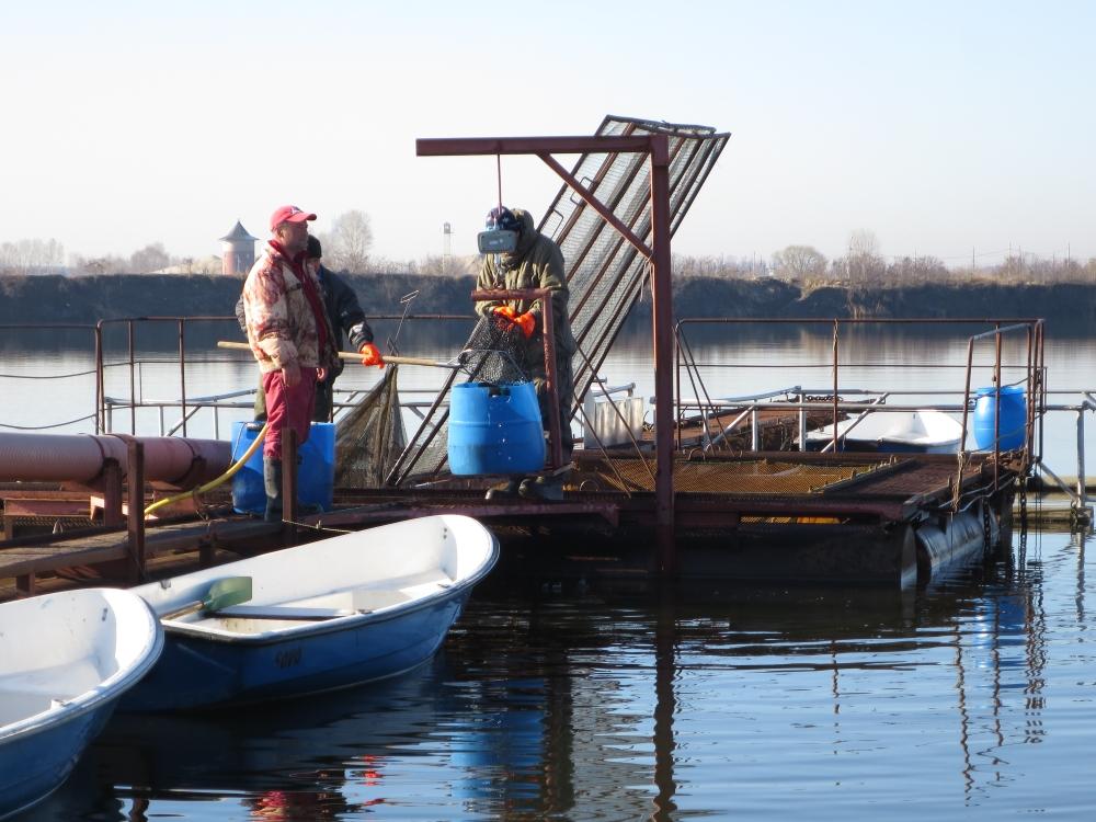 питерский рыболовный форум новости с водоемов
