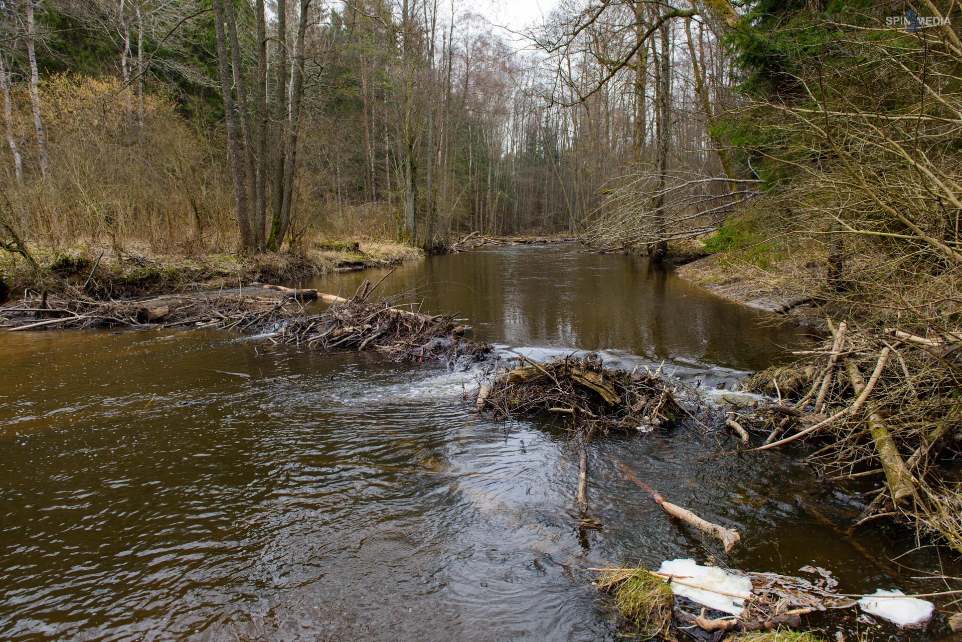 Дамба и плотина для пруда Разведение карпов 59