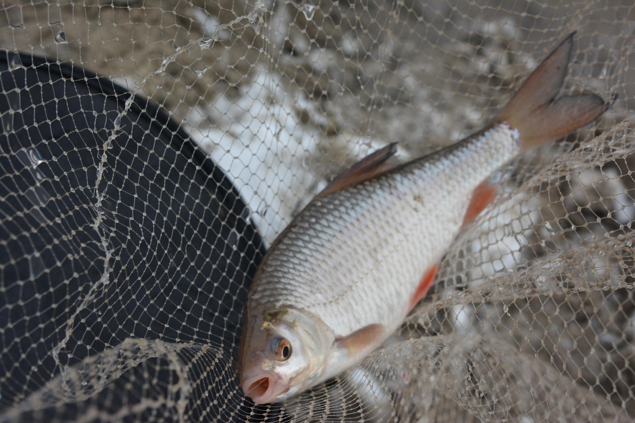 клюет ли рыба