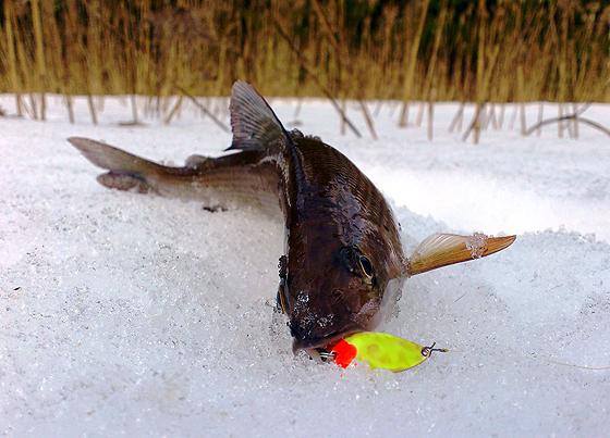 зимния рыбалка на хариуса
