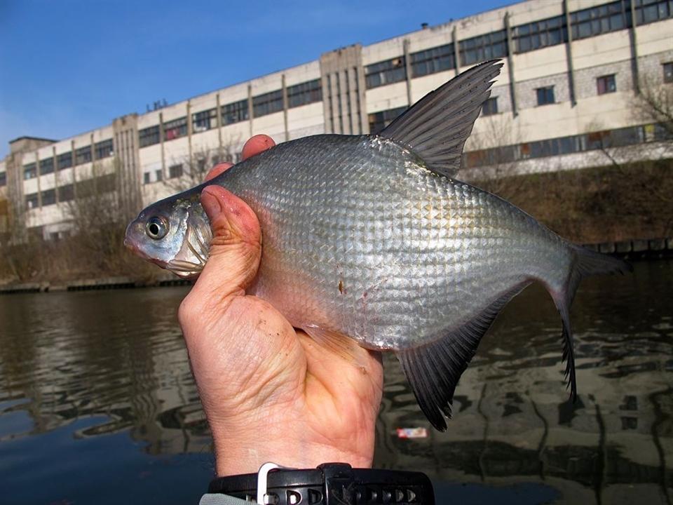 рыбалка в минске видео