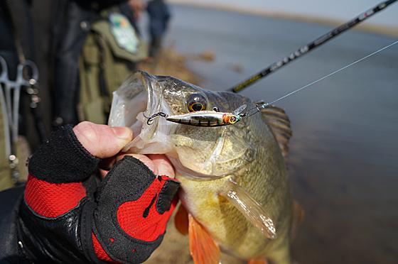 Рыбалка окуня на воблер
